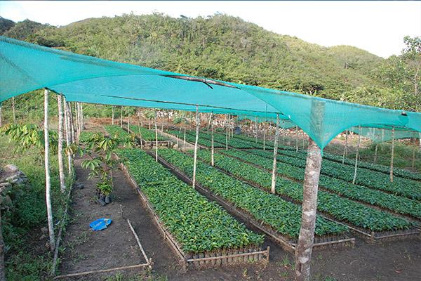 Agrocafe