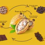 Transforma el cacau en xocolata
